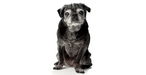Senior pets make excellent companions and deserve special care. Photo by Bark Magazine.