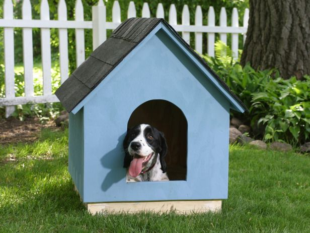 Make sure your dog has shelter to keep cool. Photo courtesy of DIY Network.