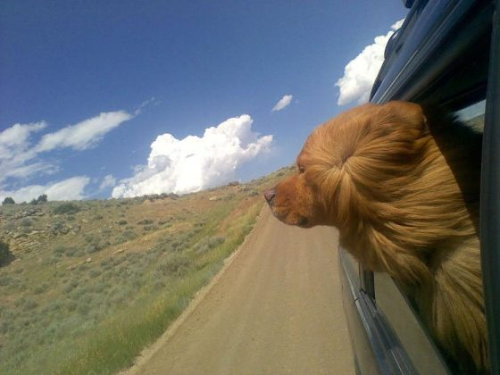 dog-on-a-road-trip-560x420.jpg