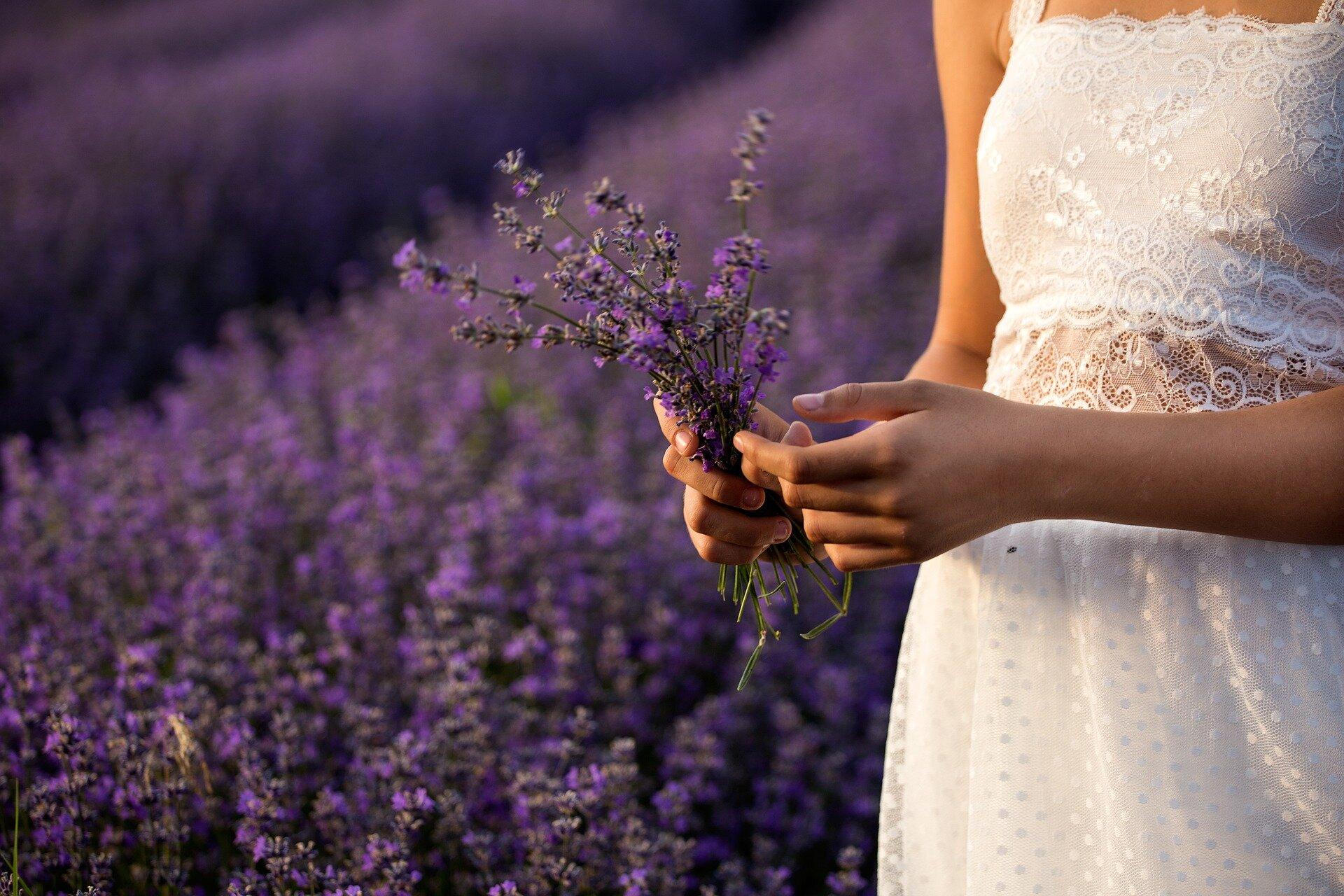 lavender-3576132_1920.jpg