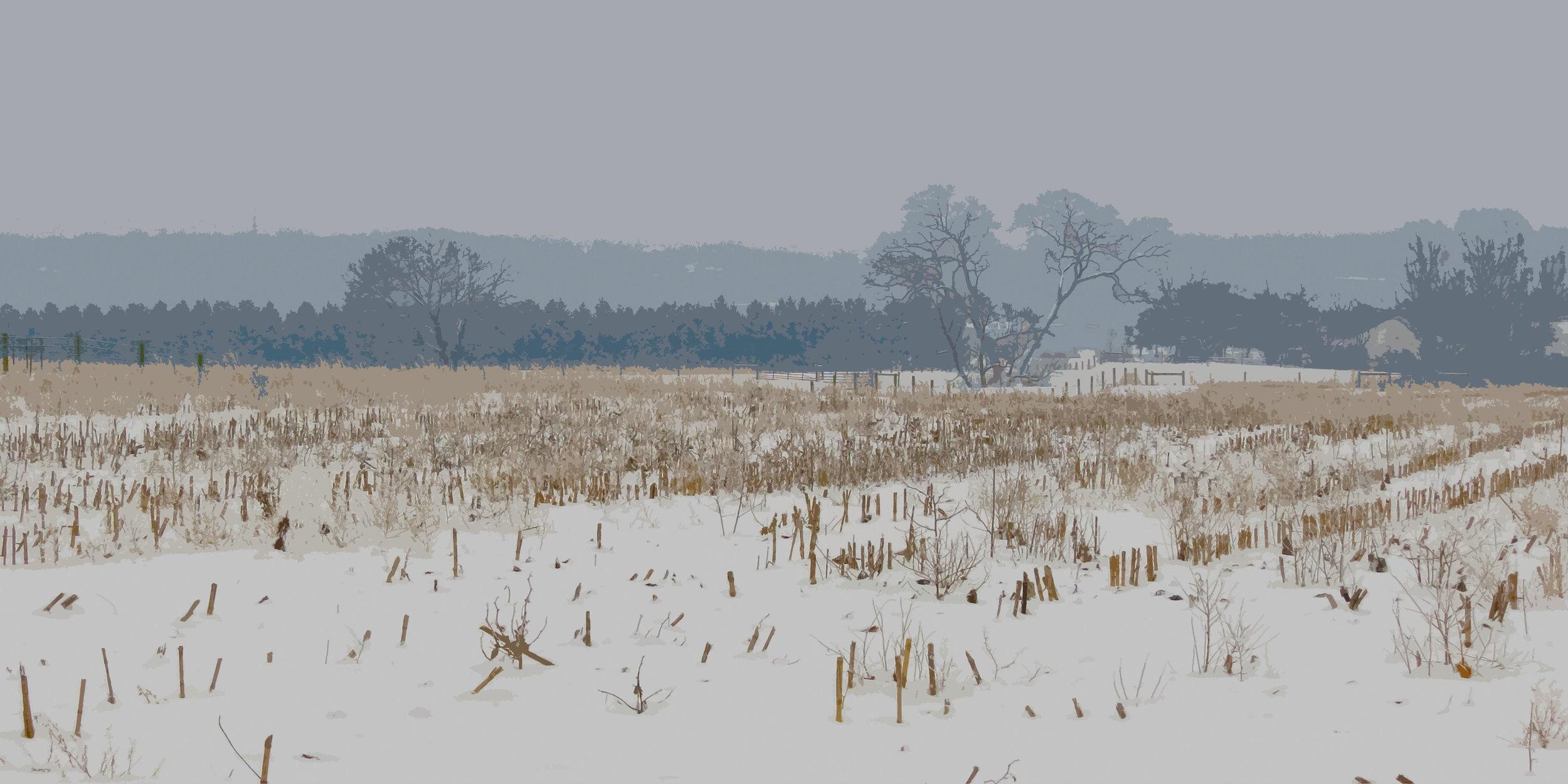 """The OSU """"farm"""" on a foggy winter morning"""