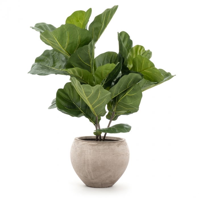 415818864_fiddle_fig_plante-1.jpg