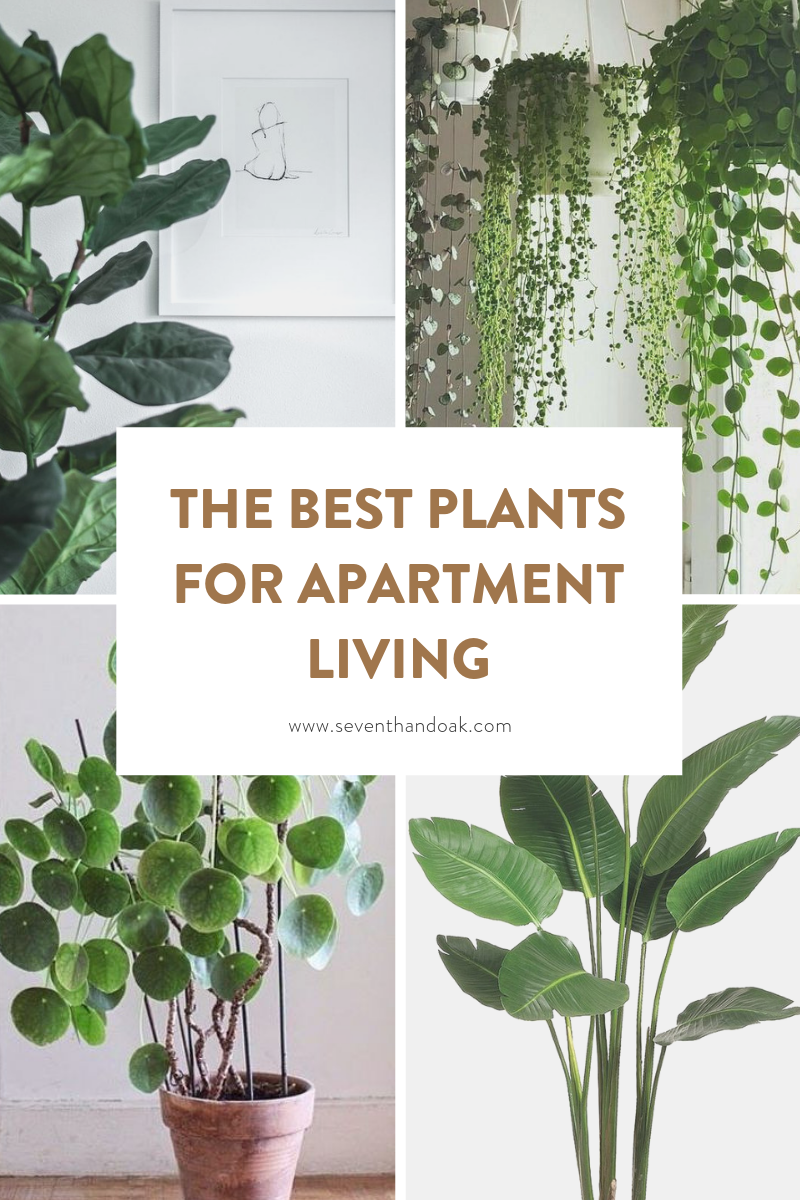 The best plants for apartment dwellers-Seventh and Oak - Feat.png