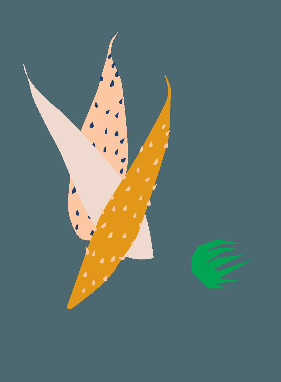The best plants for apartment dwellers-Hedgehog Aloe-SeventhandOak.png