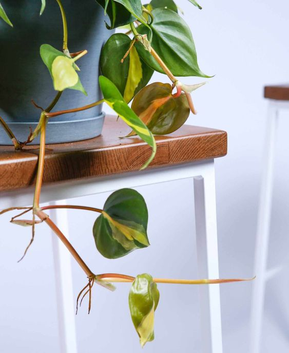 - The Best Plants for Apartment Living