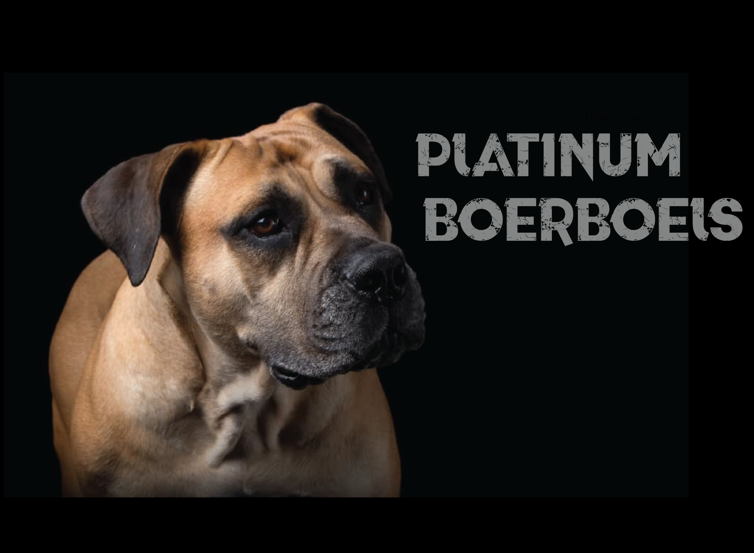 Platinum Boerboel Website Background1-01.png