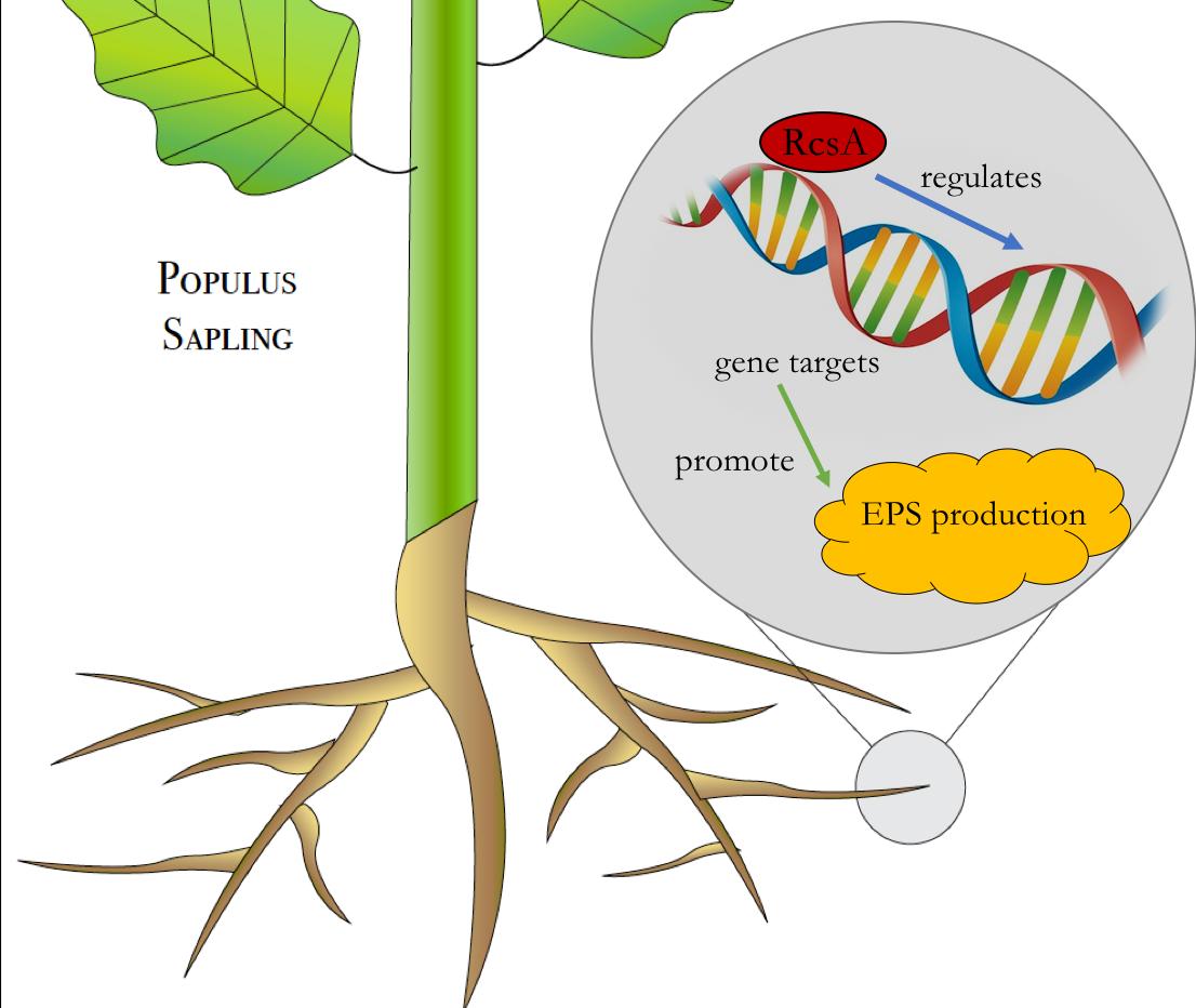Dissertation - Plant-Microbe Interactions