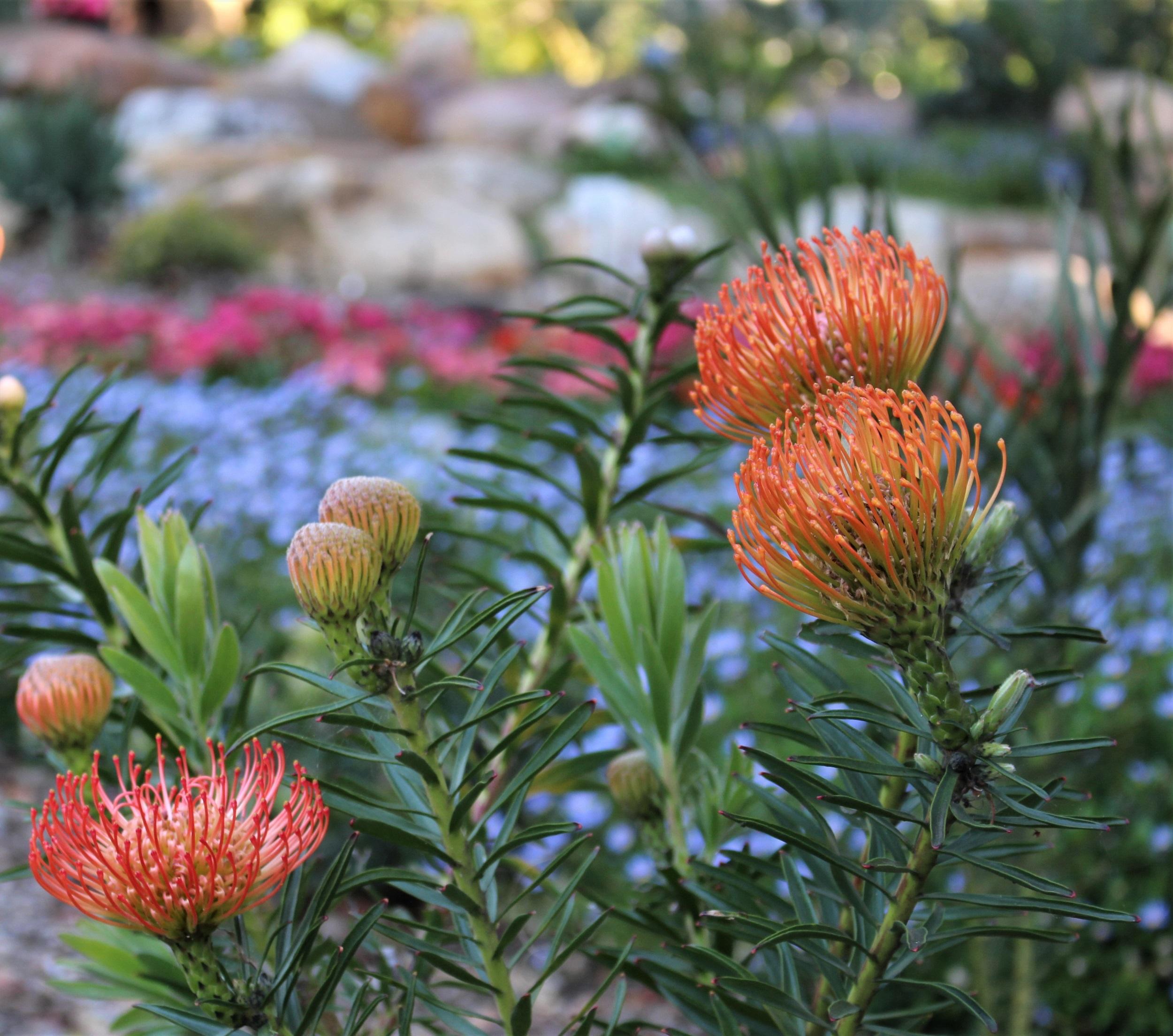 Southern African Garden