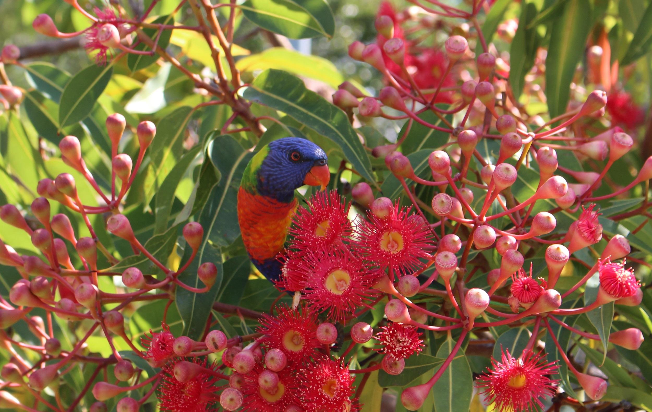 Euryalusbird.jpg