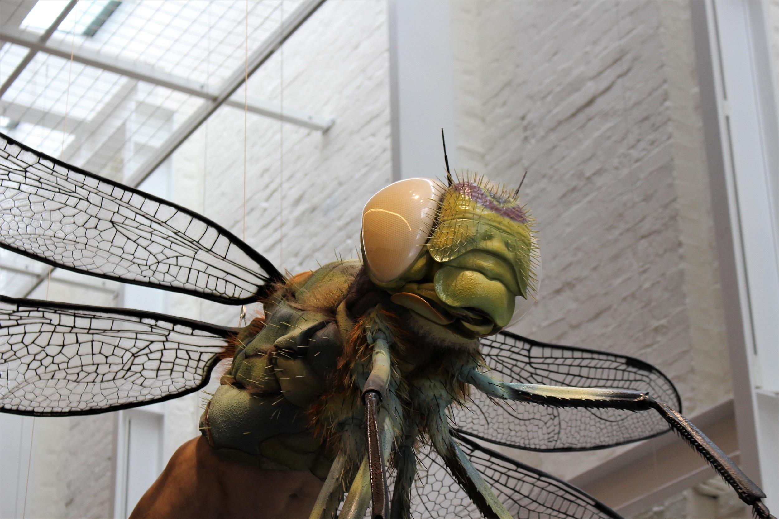 whiterabbitfly.jpg