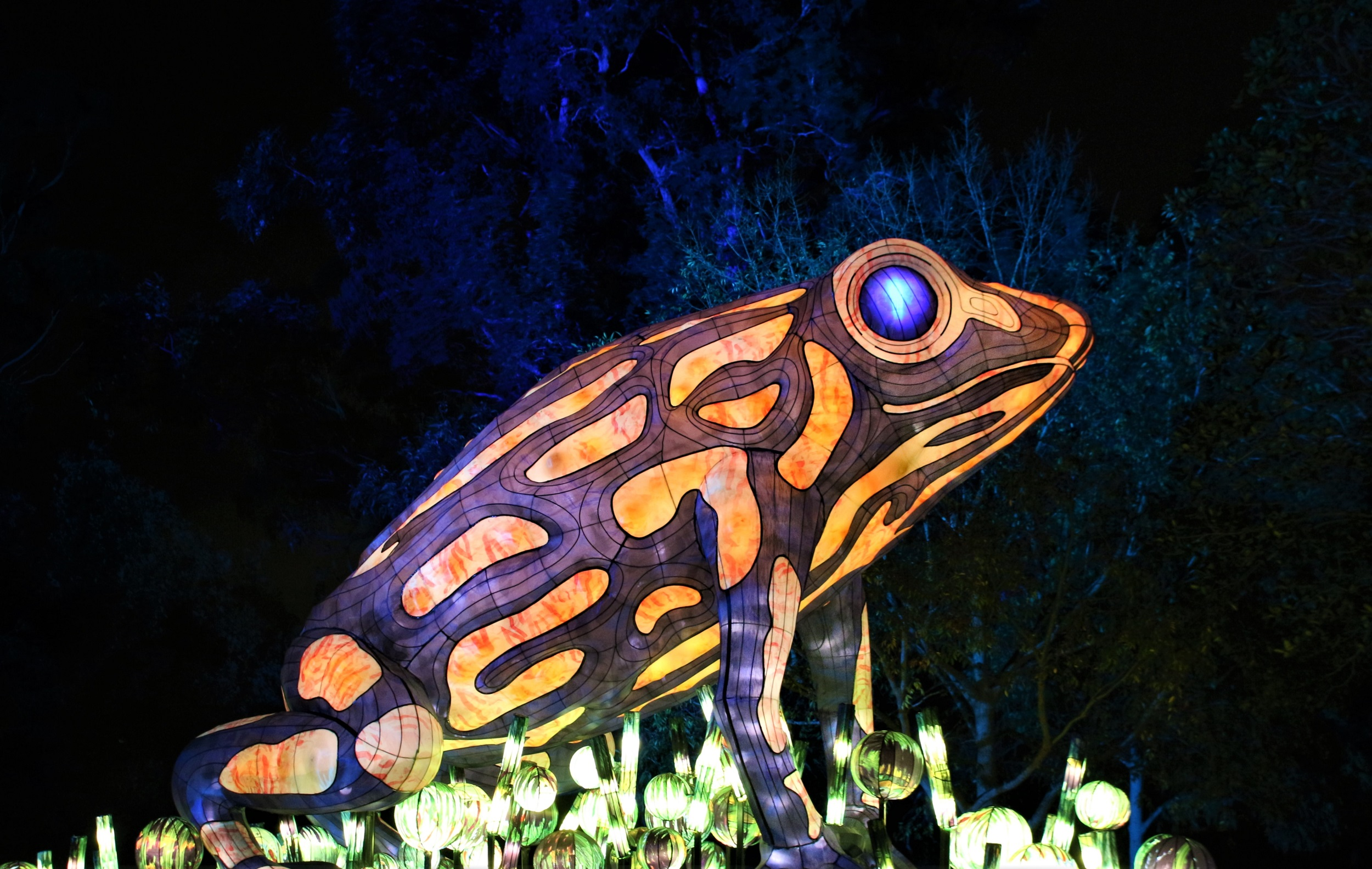 A ribbiting lantern
