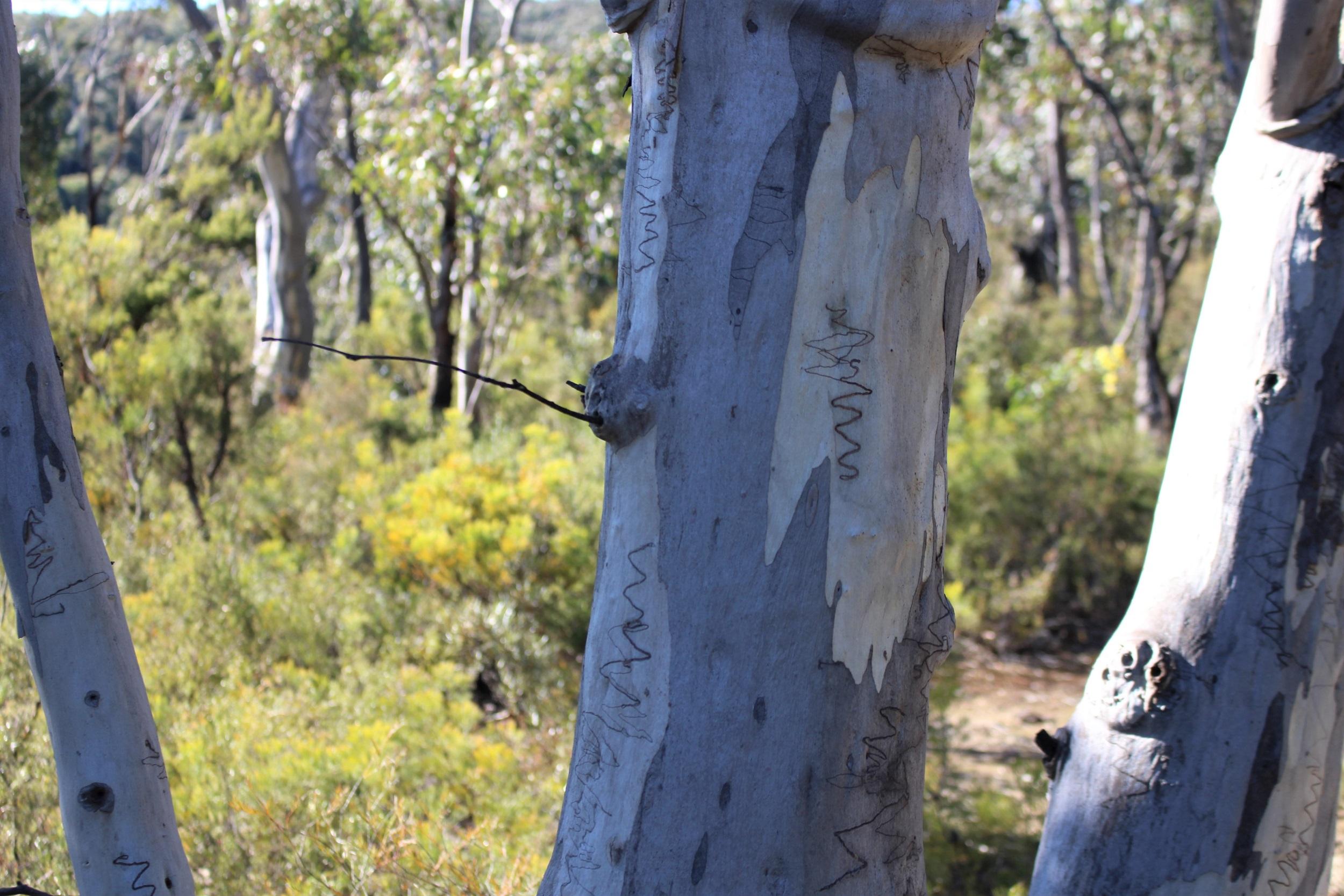 primary school vandals?