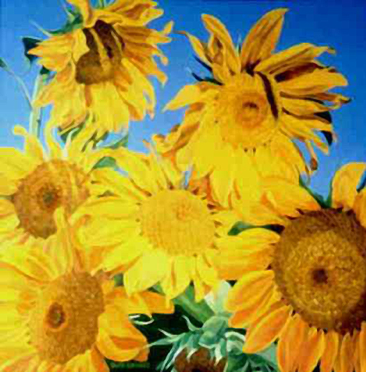 32652-SUNFLOWERS_0.jpg