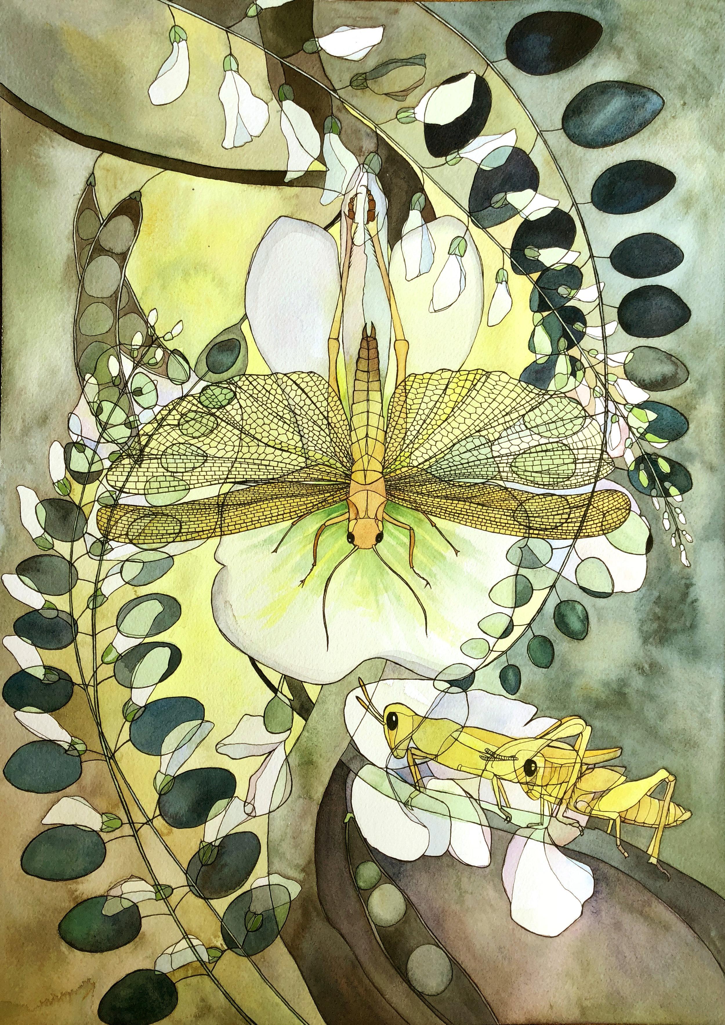 Locust X Locust ( Chortoicetes terminifera x Robinia pseudoacacia )