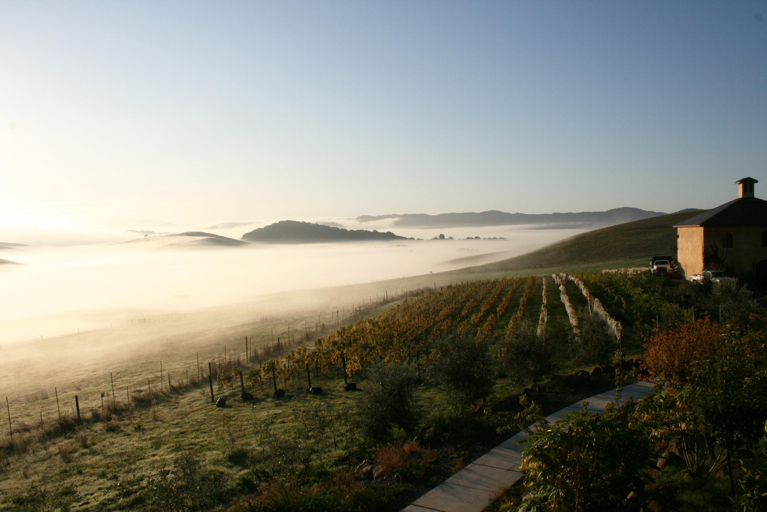 Azari Vineyards, Petaluma