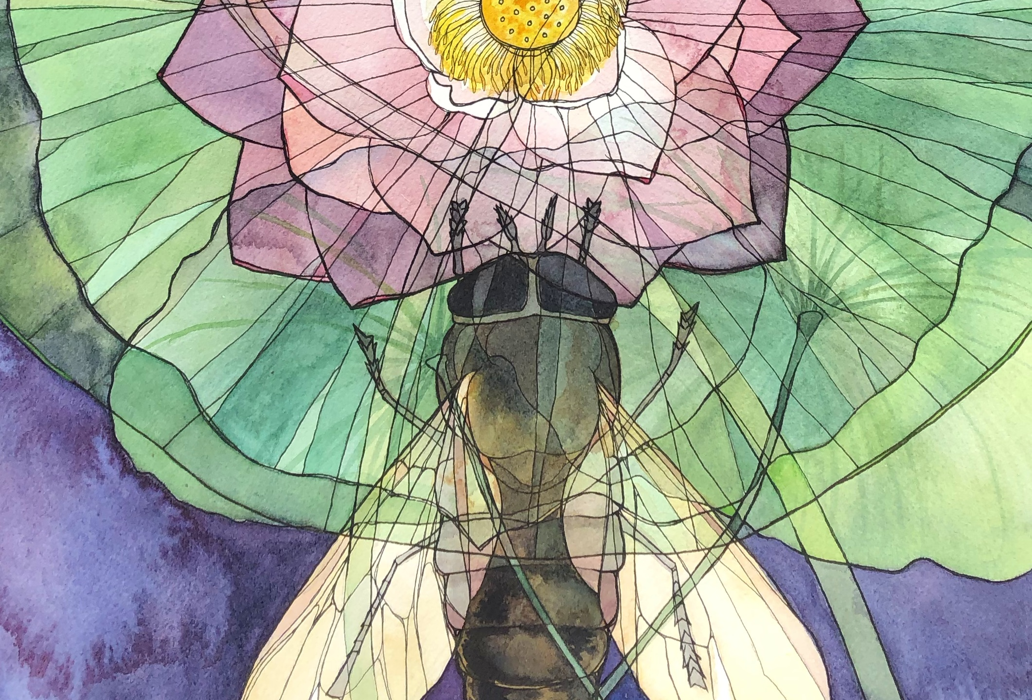 Gadfly x Lotus (Tabanus bovinus x Nelumbo nucifera), 2019. Ink and watercolor on paper.