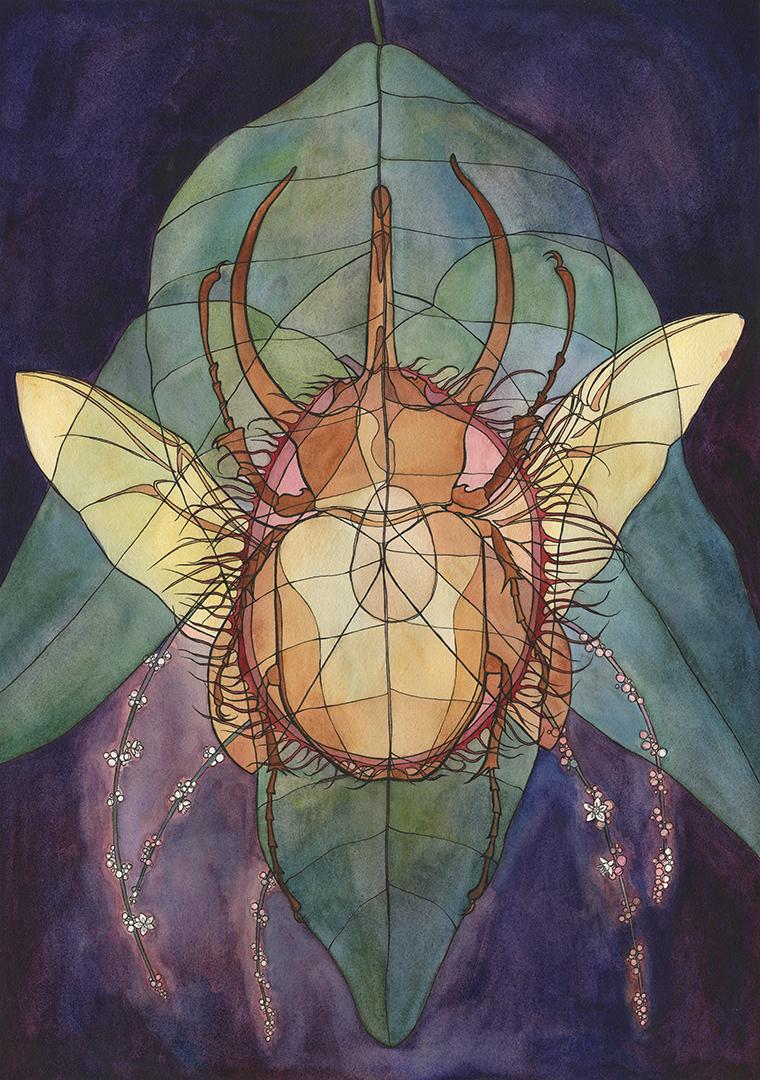 Beetle x Rambutan