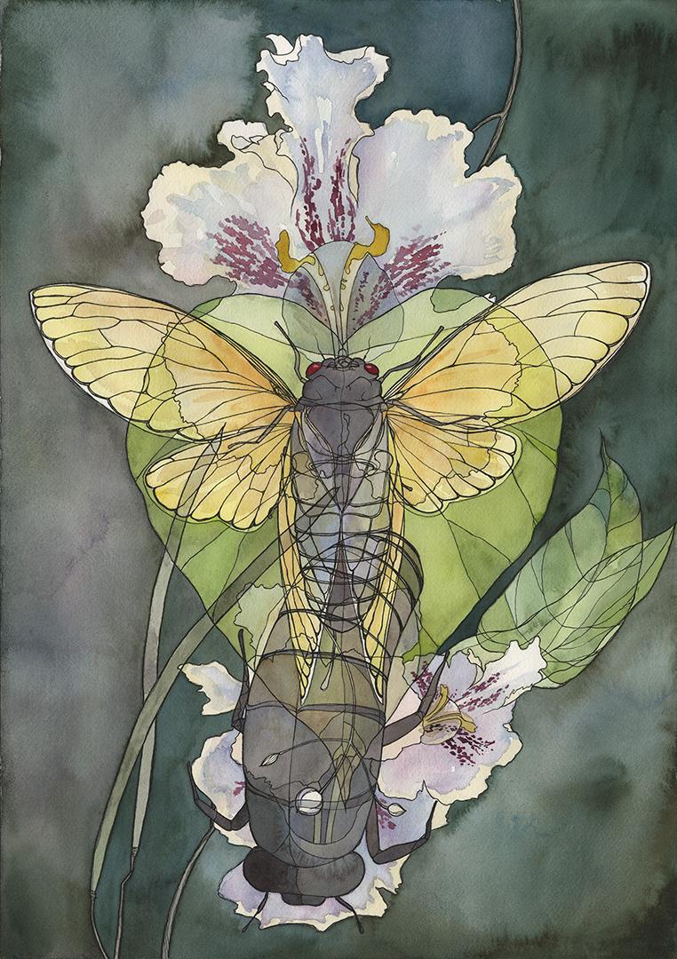 Cicada x Catalpa