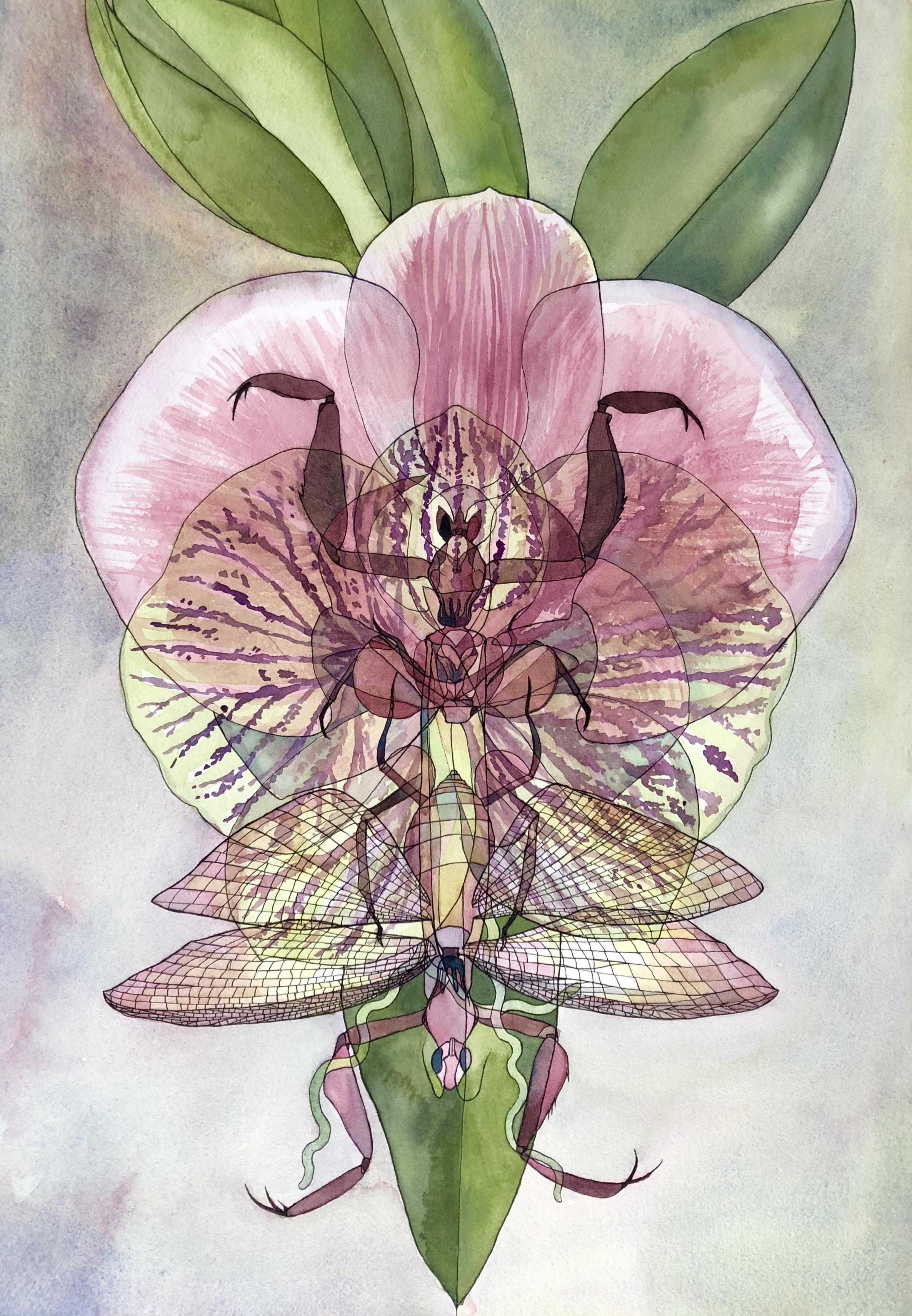 Mantis x Orchid