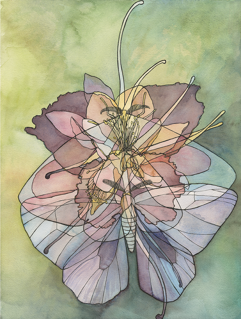 Moth x Iris x Columbine