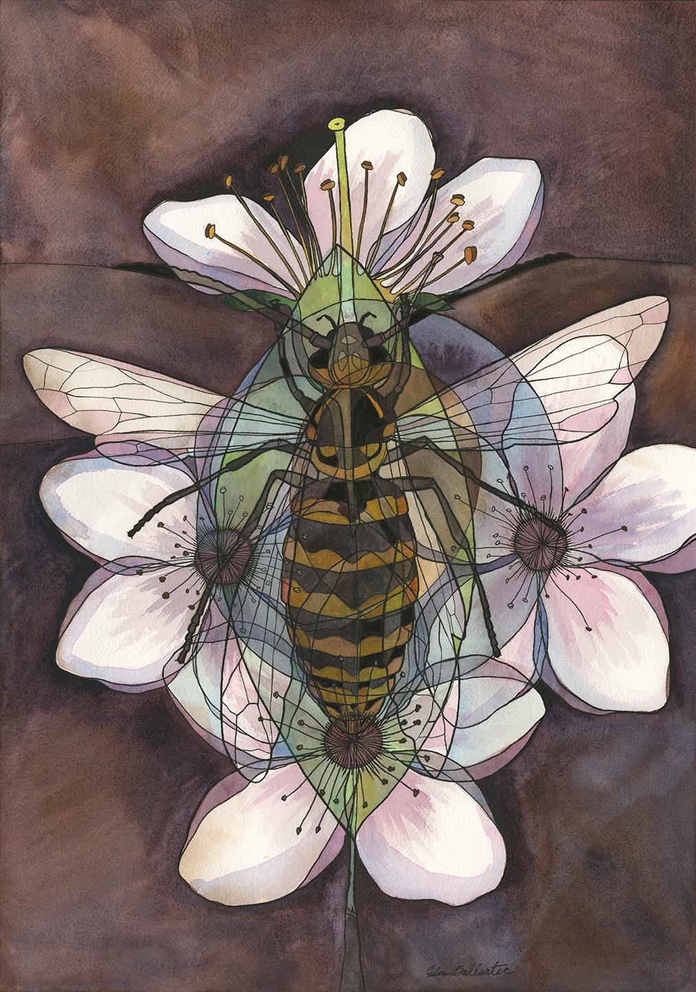 Wasp x Plum
