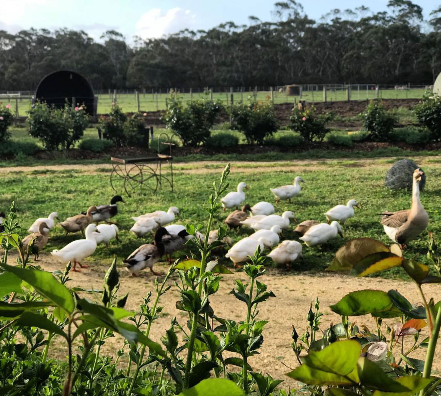 Freshwater Creek Cottages - Farmstay accomodation Victoria_-7.jpg