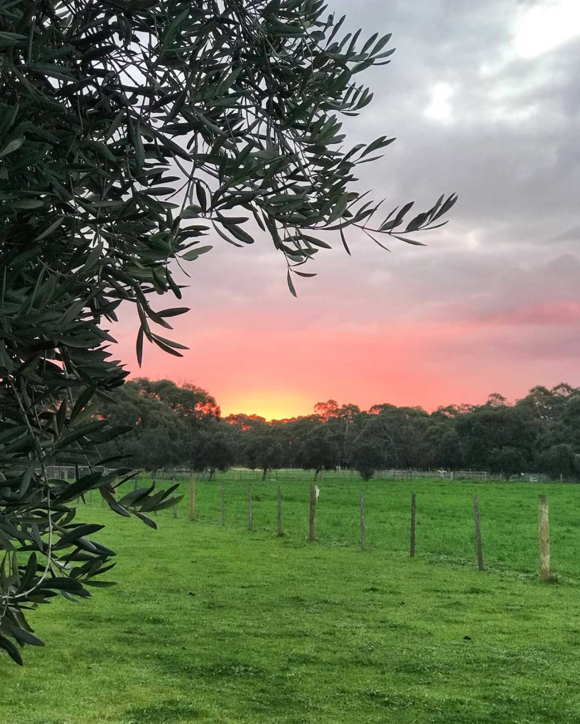Freshwater Creek Cottages - Farmstay - best family holidays Victroria - Australia _-14.jpg