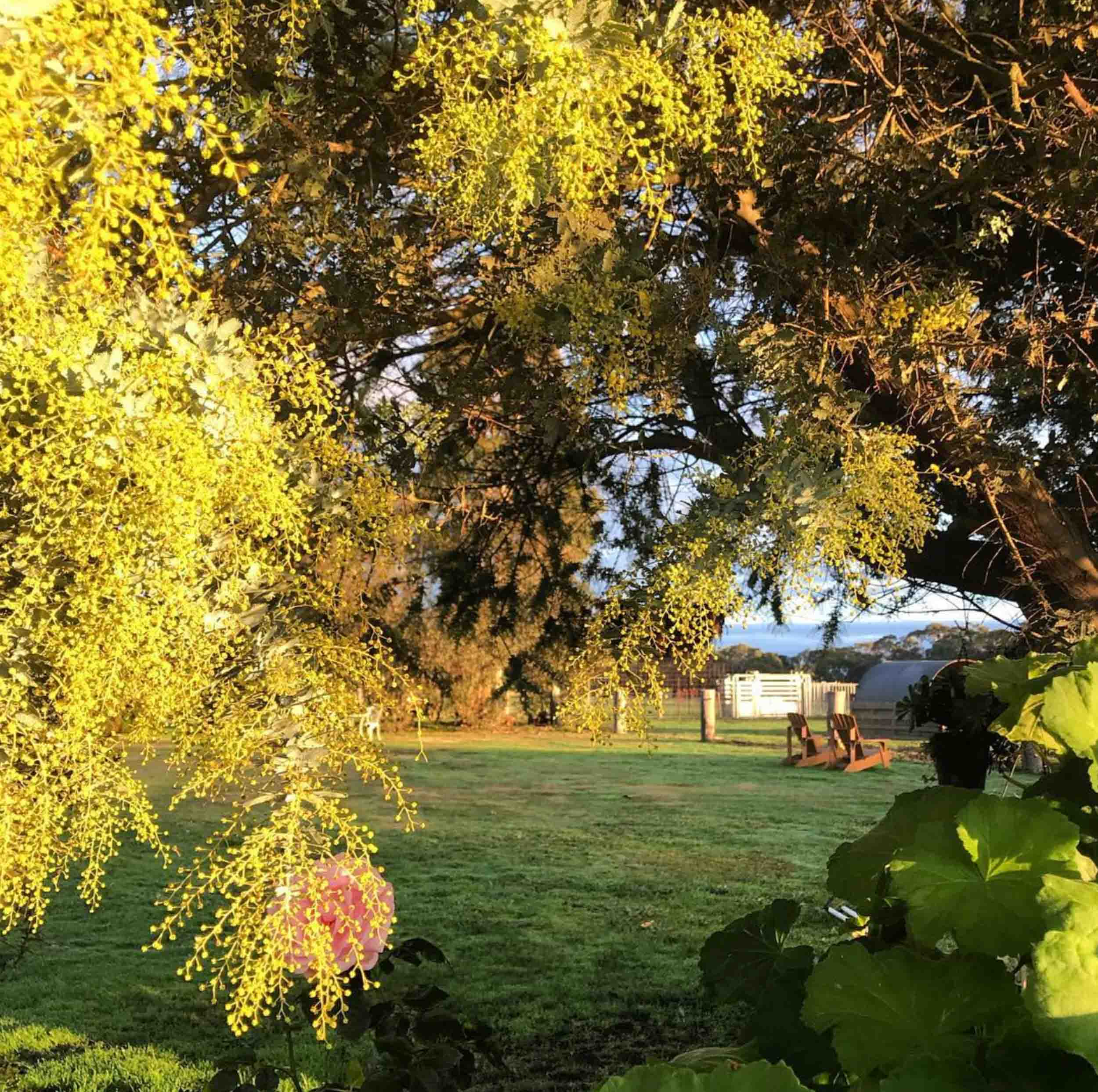 Freshwater Creek Cottages - Farmstay - best family holidays Victroria - Australia _-18.jpg