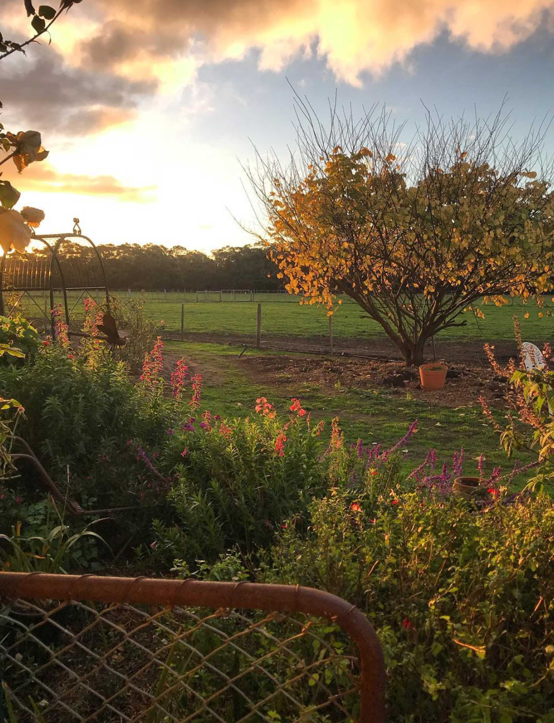 Freshwater Creek Cottages - Farmstay - best family holidays Victroria - Australia _-24.jpg