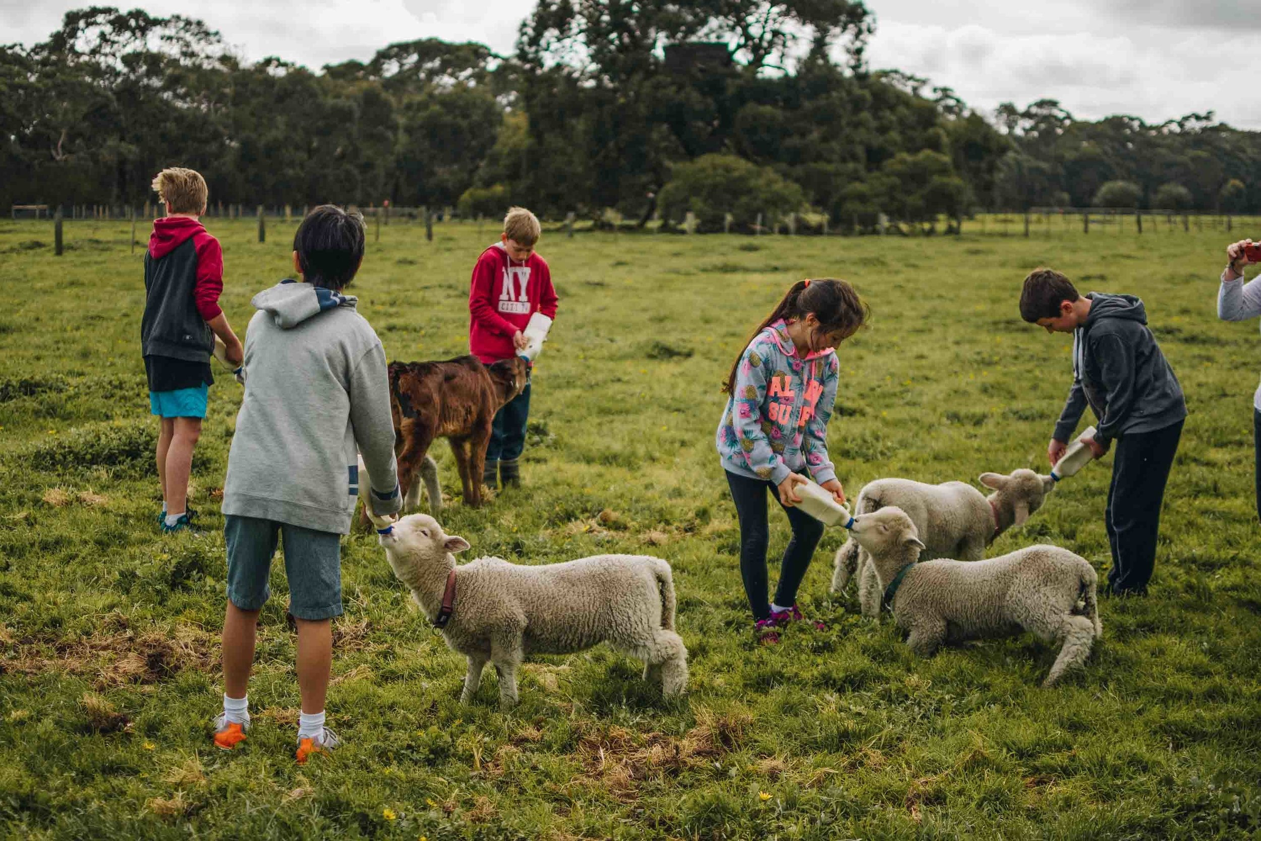 Freshwater Creek Cottages - Farm Stay Accomodation - Best Family Holidays Victoria-5.jpg