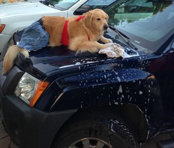 no-idea-what-im-doing-dog-washing-the-car_0.jpg