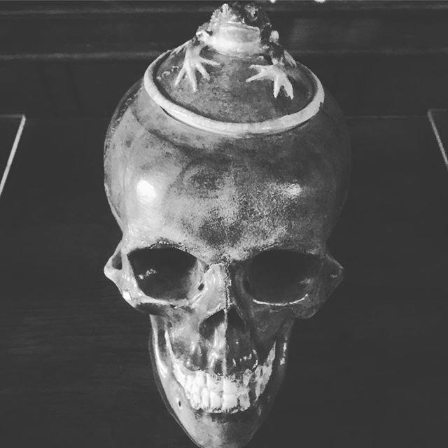 Sugar bowl 💀 / Agatha Christie had great taste #skull