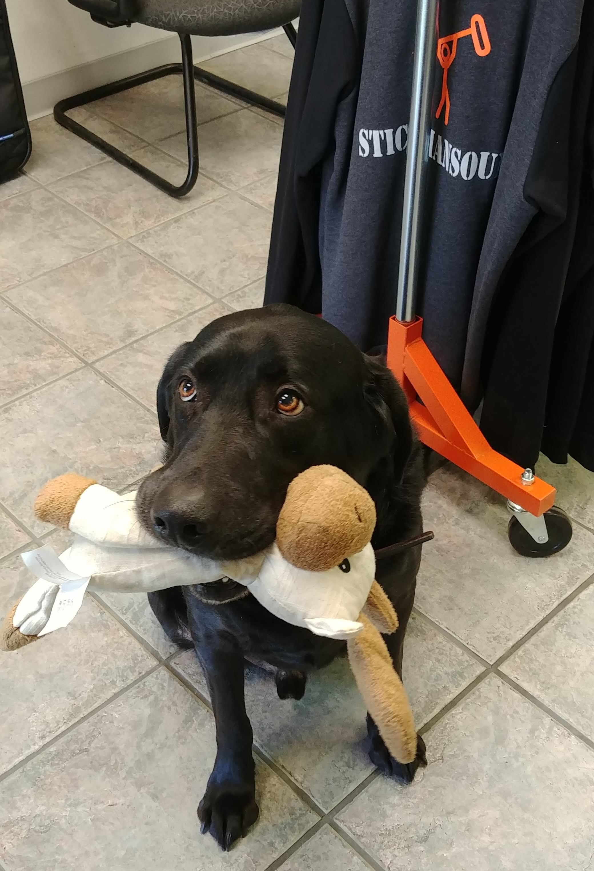 Bonus Newsletter Photo! This is Jack and his Moose. John came to pick up gear and brought his four legged friend in to visit. It was a good day!