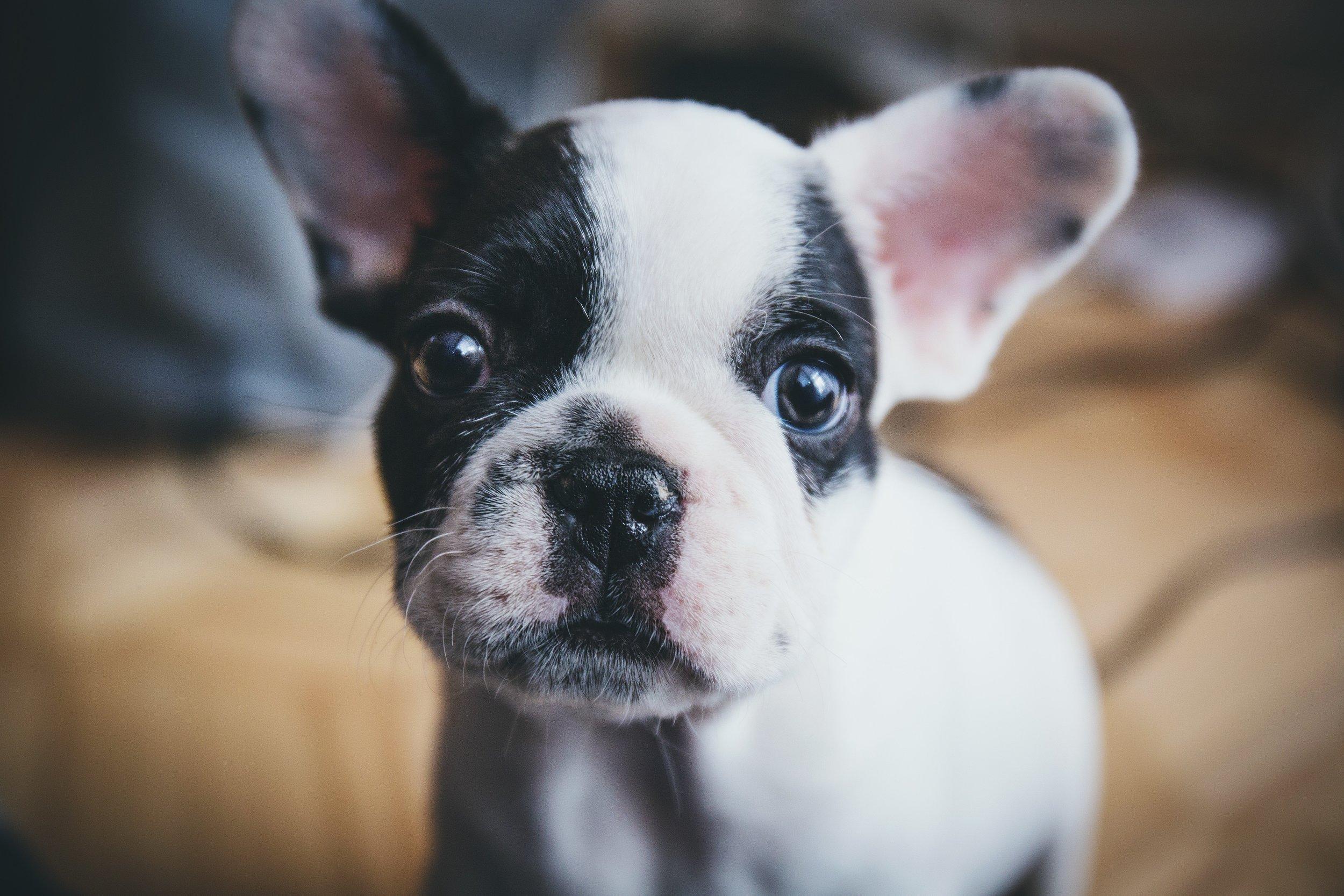 animal-dog-pet-14644.jpg
