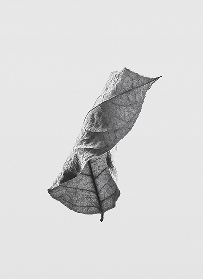 Floating Leaves 01, $30  —Norm Architects, Paper Collective