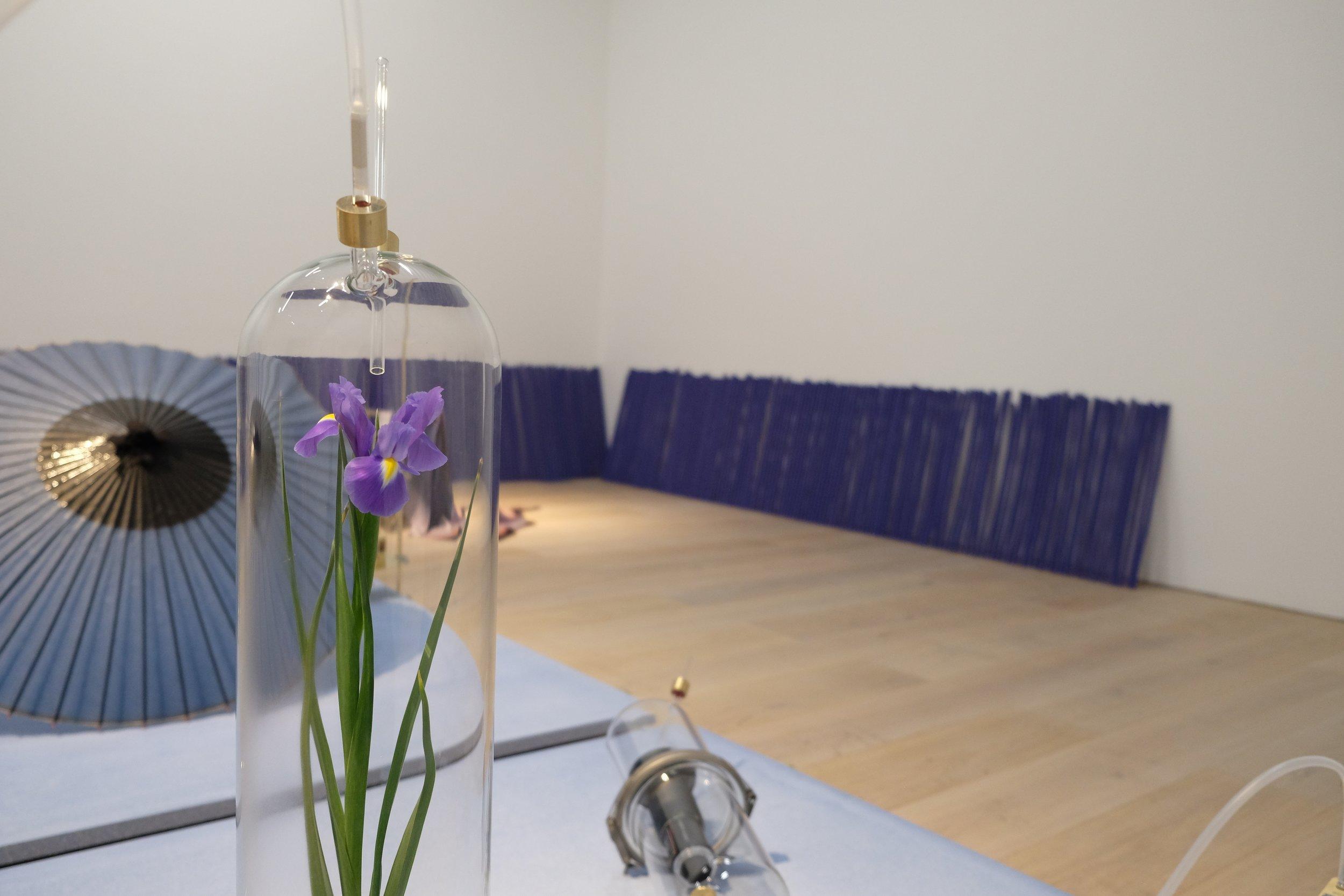 Dane Mitchell,  Iris, Iris, Iris  2017 Installation view: 'MAM Project 024: Dane Mitchell', Mori Art Museum, Tokyo, 2017