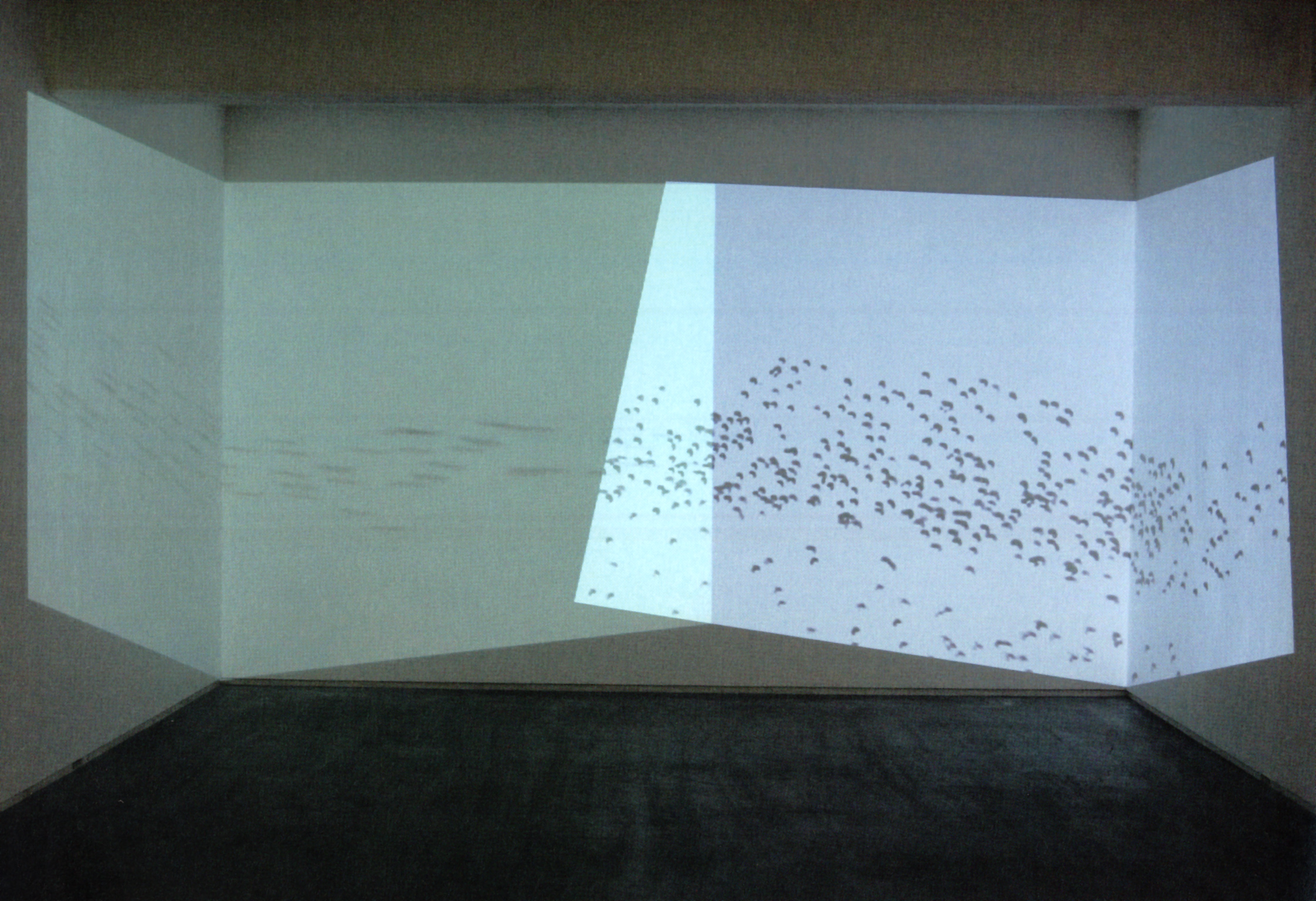 Untitled (birds) , 2006 single-channel video, color, silent 11 min. 13 sec., dimensions variable Edition of 5