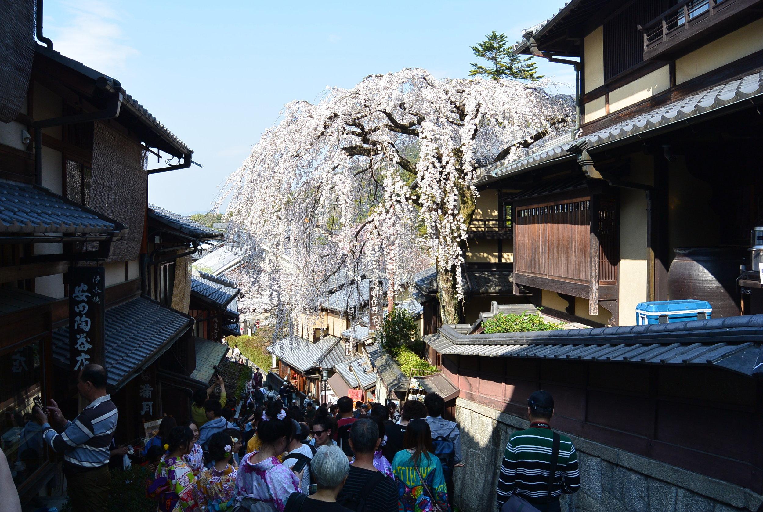 Day 4: Kyoto!