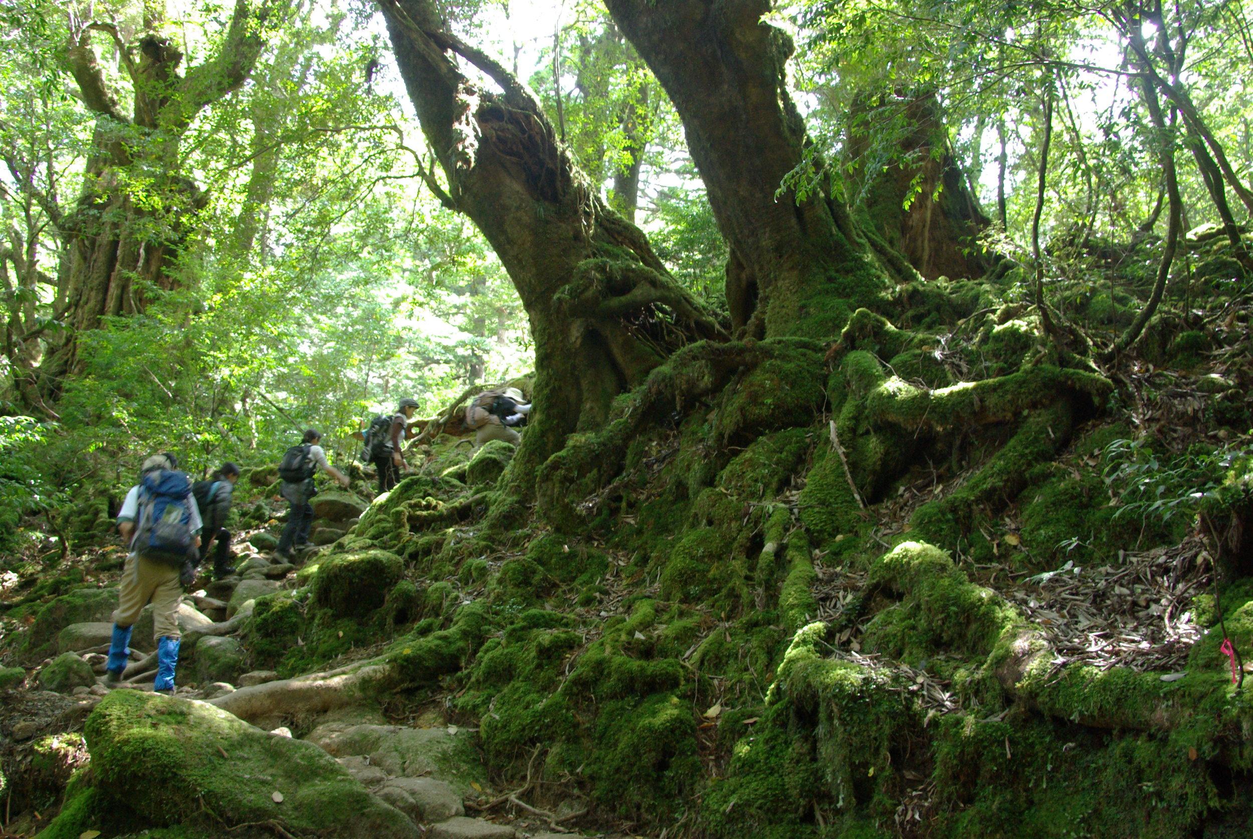 Day 4: Yakushima