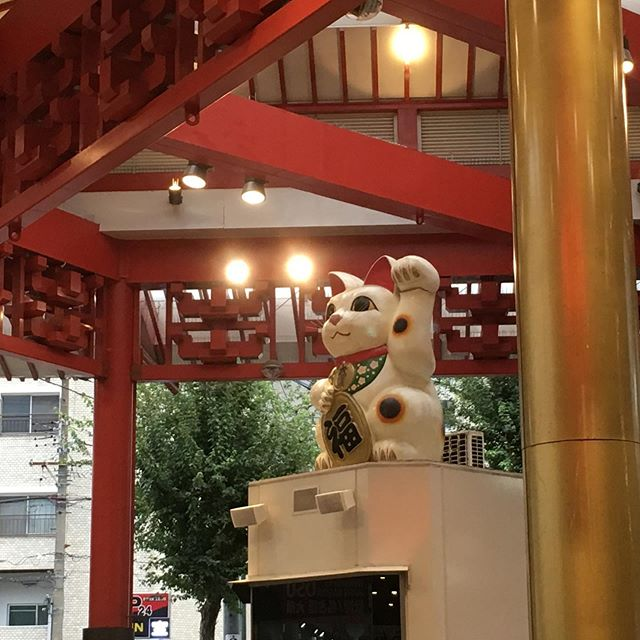 A giant lucky cat lords over a mish-mash of used toy stores, beer pubs, and hole-in-the-wall shops leading to the Osu Kannon. If you want local flavor in Nagoya, you can't do much better than Osu-dori! #pacset #pacsettravel #autumninthecity #travelamongfriends #nagoya #japan #japantravel