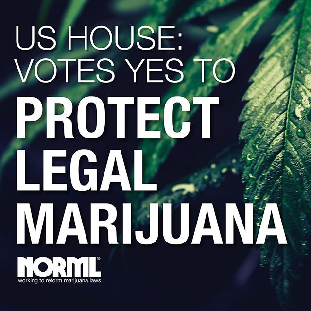 Repost from @natlnorml - We. Did. It. For the first time ever, the House of Representatives just voted to restrict the Department of Justice from interfering with the states that have legalized adult-use marijuana.  The importance of this 267 to 165 bipartisan vote on the Blumenauer amendment cannot be overstated. Today, nearly one in four Americans reside in a jurisdiction where the adult use of cannabis is legal under state statute.  This action by the Congress highlights the growing power of our movement and the work of NORML leaders all around the country.  Now, we must shift our focus to the Senate and ensure that they do not move to strip out these hard-fought protections.  #Linkinbio now to make a contribution to our Senate Education Fund right now so we can do a full-court-press and cure those Senators who are suffering from Reefer Madness!  Never in modern history has there existed greater public support for ending the nation's nearly century-long failed experiment with marijuana prohibition. Now is our time to make our voices heard in the halls of Congress.  Together, we're going to win this vote, and ultimately end marijuana prohibition from sea to shining sea. Together, we will #LegalizeAmerica. #NORML