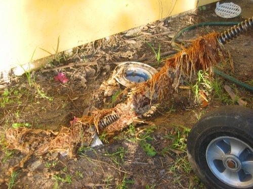 roots drain.jpg