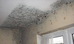 mould on ceiling .jpg