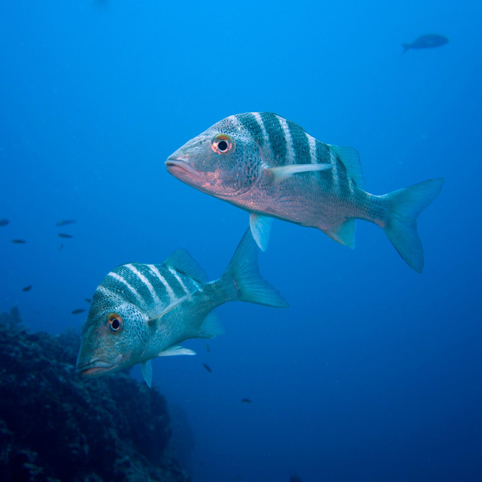 Tuna… -