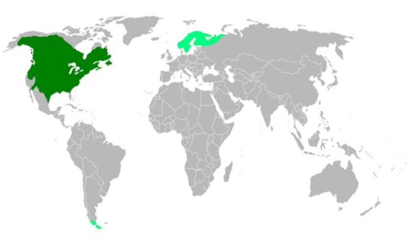 Castor canadensis (North American beaver) distribution: Dark green: native Light green: introduced