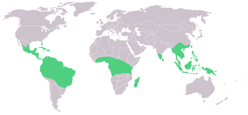 Green: Distribution of Vanilla species.