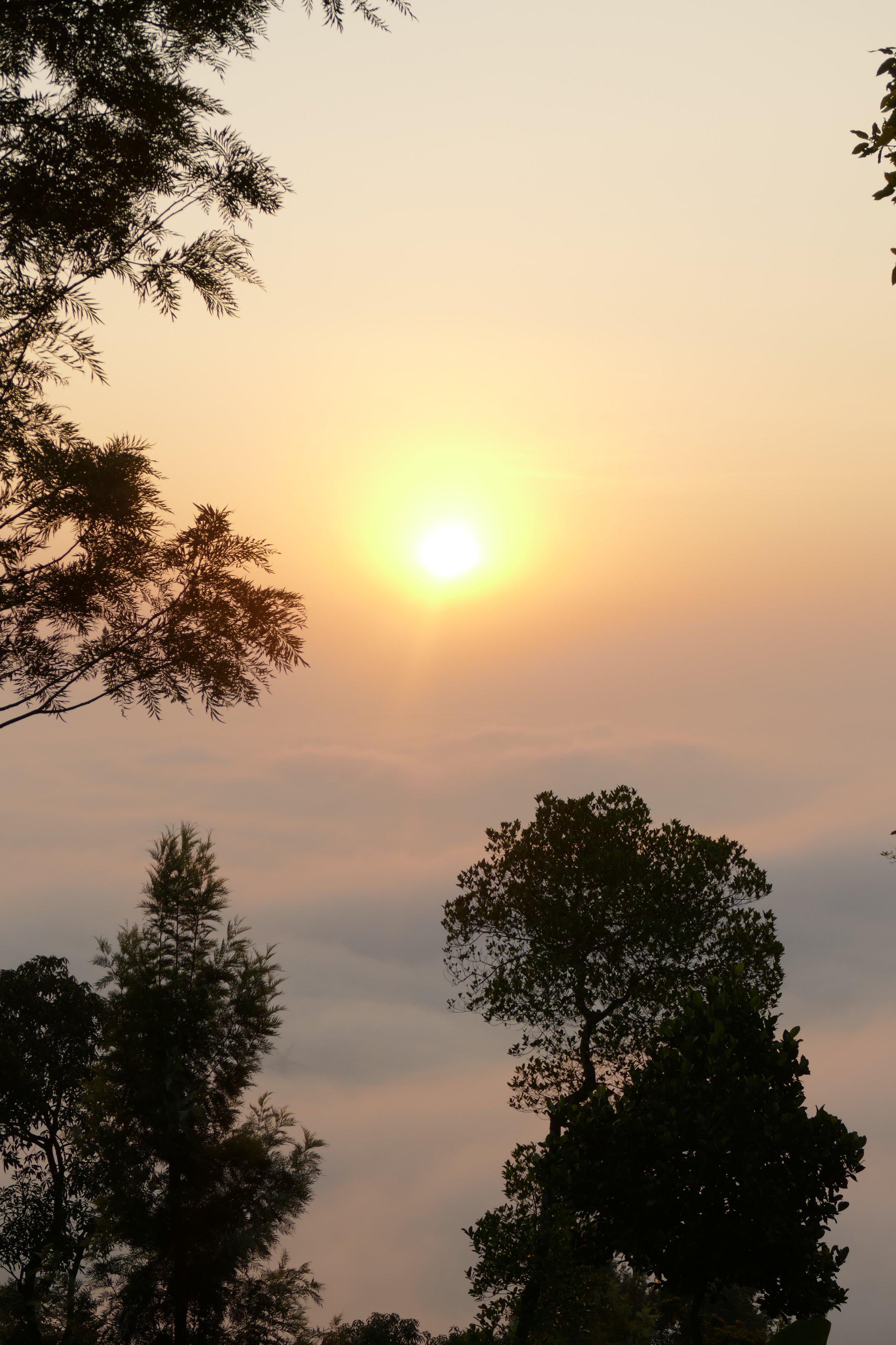 Kerala, dans les collines de Wayanad, Inde