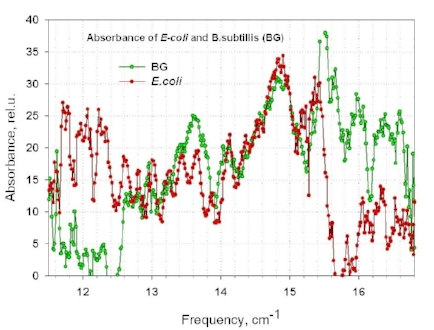 Fig.6. Absorption spectra of bacterial cells