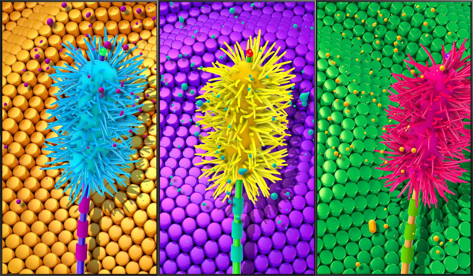 blossom_0010_Blossom - Sample Image - 31.jpg
