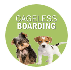 cageless boarding.png